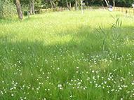 大塚成就院池のサギ草